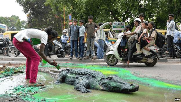 _91396625_potholes_crocodile_afp
